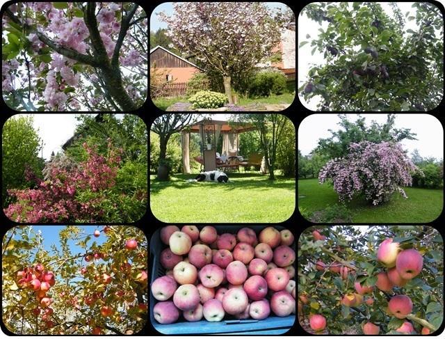 Jabloň od jara do podzimu